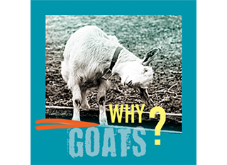 Why Goats?